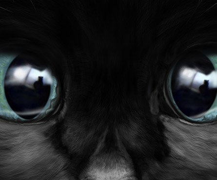 Coquin de chat