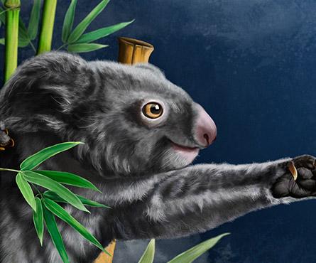 Koala attrape lune